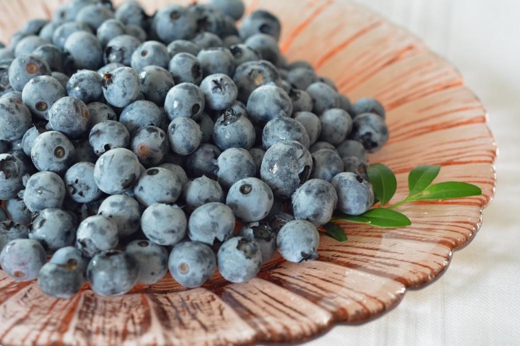 Myrtilles bleuets